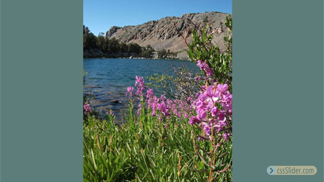Fireweed at Green Lake by Harry Williams